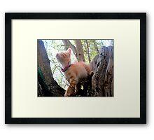 Red kitty 3 Framed Print
