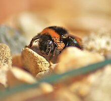 Mother Bee by David Morgan