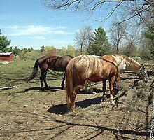 Groton Horses by SPPhotography