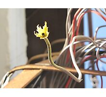 techno flowers by Ntle Photographic Print