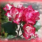 The most beautiful roses by daffodil