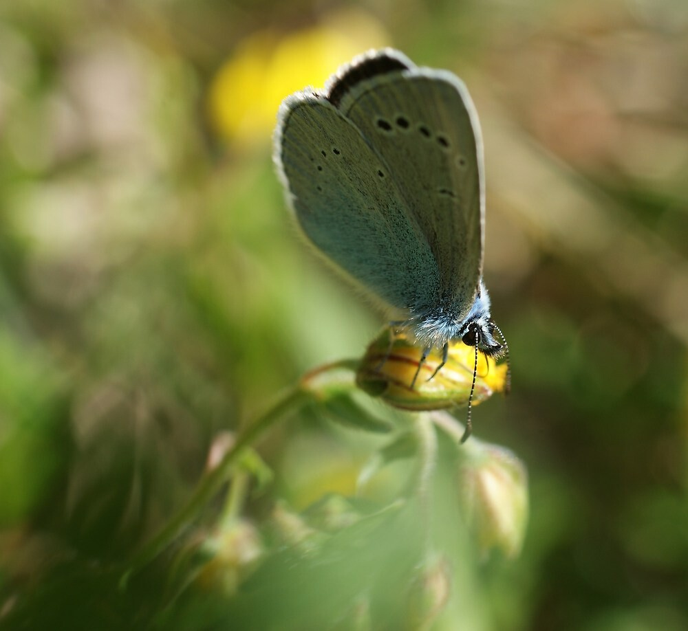 Green-Underside Blue by marens