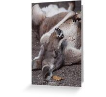 The Life of a Kangaroo- Scooby Roo Greeting Card