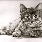Kitten by James  Arguile