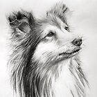 Sheepdog by James  Arguile