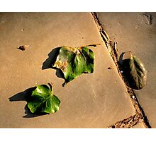Autumn Leaves 2 Photographic Print