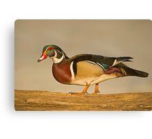 Wood Duck on log Canvas Print