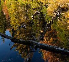 Fall Mirror - Mesmerizing Forest Lake Reflections by Georgia Mizuleva