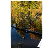 Fall Mirror - Mesmerizing Forest Lake Reflections Poster