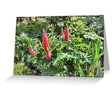 RED GARDEN FLOWERS. Greeting Card