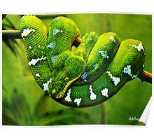 Gree Tree Python Poster