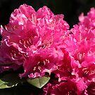 pink little flowers by xxnatbxx