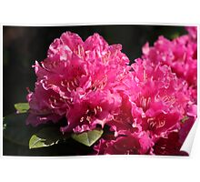 pink little flowers Poster
