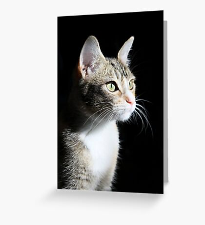 Mallory in sunlight  Greeting Card