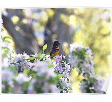 Singing My Song -Baltimore Oriole Poster