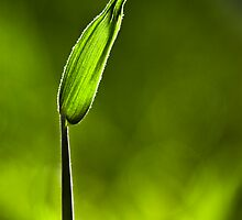 Sunlit Drop of Rain on Grass by Natalie Kinnear