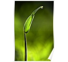 Sunlit Drop of Rain on Grass Poster
