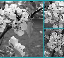 Black and White Tree Blossoms by debbiedoda