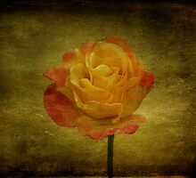 Orange Rose by Sandy Keeton