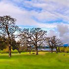 Sir Garry Oak and His Friends - Vancouver Island by deze