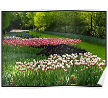 Tulip Time. Poster