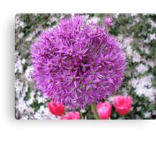 Purple Sensation - Allium and Pink Tulips Canvas Print