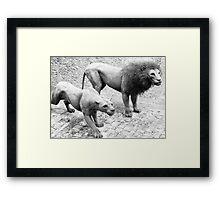 Wirework Lions Framed Print