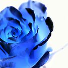 Blue rose by Llawphotography