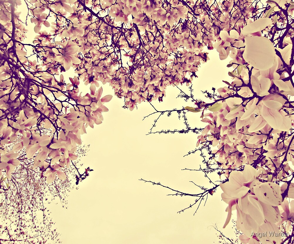 blossoms on top of me by Angel Warda