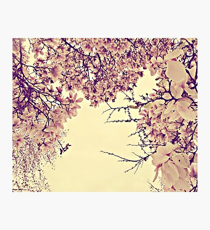 blossoms on top of me Photographic Print