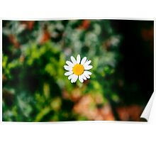 Flowers in the garden Poster