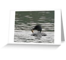 Common Loon with Prey Greeting Card