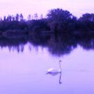 Swan Lake in Blues by anaisnais