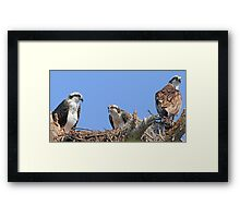 Mother`s day osprey style! Framed Print