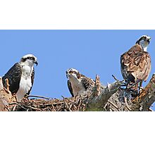 Mother`s day osprey style! Photographic Print