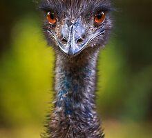 Woohoo for the Emu by alan shapiro