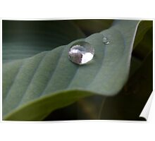 Water bead on a leaf Poster
