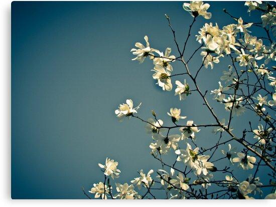 Spring Skies by kflanary