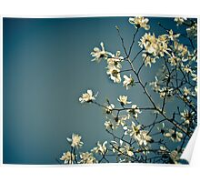Spring Skies Poster