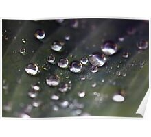 Many drops of water on a leaf Poster