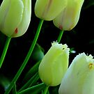 Five tulips. by Jean-Luc Rollier