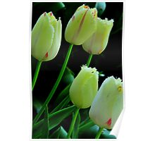 Five tulips. Poster