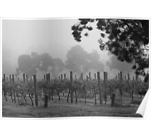 Misty Vineyard Poster
