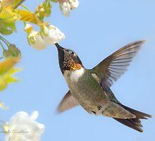 Ruby-throated Hummingbird in flight by PixlPixi