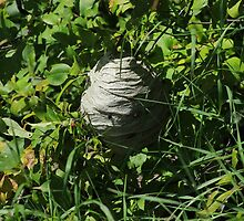 Wasp Nest by rhamm