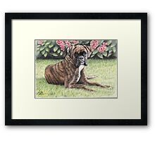 Boxer Girl Framed Print