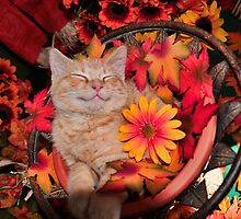 Cute Kittens and Kitty Cats in Flowers Calendar by Chantal PhotoPix
