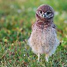 Tiny OWL-ete by Kathy Cline