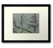 Getting back down to nature - grass seeds Framed Print