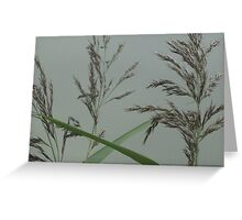 Getting back down to nature - grass seeds Greeting Card